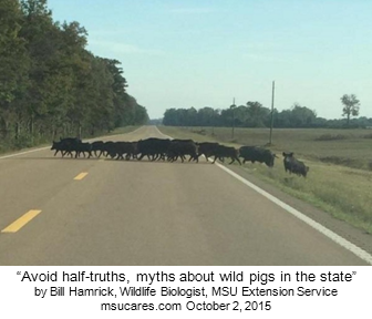 Link to article by Bill Hamrick - Avoid half-truths, myths about wild pigs in the state